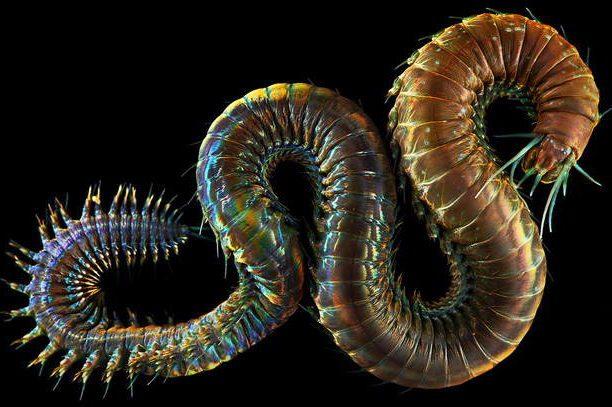 Deep Sea Worm